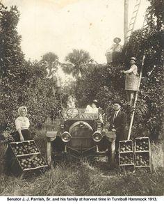 Harvest time at Parrish Groves in Titusville, Florida circa Vintage Florida, Old Florida, State Of Florida, Florida Usa, Antique Photos, Vintage Pictures, Old Pictures, Old Photos, Citrus County Florida