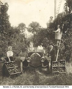 Parrish Family in Turnbull Hammock Groves - 1913.