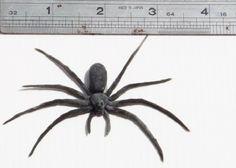 Fake Spider Rubber Tree SonStarShop http://www.amazon.com/dp/B00A91W14I/ref=cm_sw_r_pi_dp_erGgwb05EA5QA