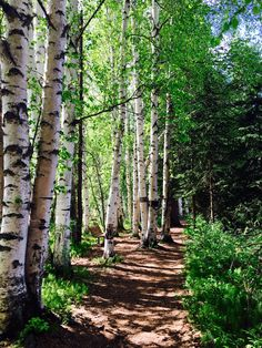 The beautiful boreal forest of Creamer's Field Migratory Waterfowl Refuge in Fairbanks