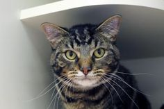 Peanut has been adopted from the Seattle Humane Society