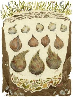 By planting different varieties of bulbs with staggered bloom times at different depths in the same hole, you can have flowers from early through late spring, even in a tight space.. via This Old House.