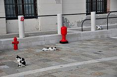 https://flic.kr/p/79mbU8 | Venician Cats | The Italians love their cats - I was stuck by the arrangement of the cats and the hydrants.