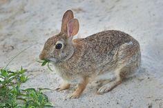 Mi conejo pierde mucho pelo, ¿qué le ocurre?