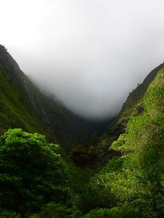 Tropical Mist - Maui, Hawaii