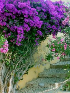 bougainville purple wall lampe stairs portugal