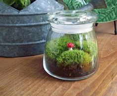 Use empty glass jars to make a lovely terrarrium.