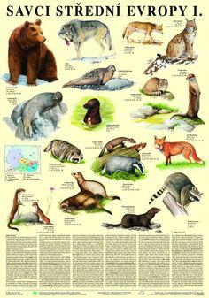 Savci střední Evropy I. - nástěnná tabule ( 67x96 cm )   ALBRA - Prodej a distribuce učebnic