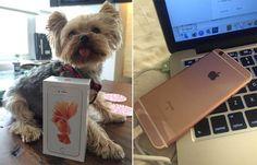 Sabías que Una Reserva del iPhone 6s Rosa Llega Antes de lo Previsto