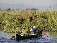 #mana #wilderness #elephant