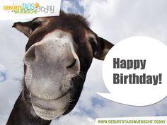 Happy Birthday und einem lustigen Esel! - Geburtstagsspruch
