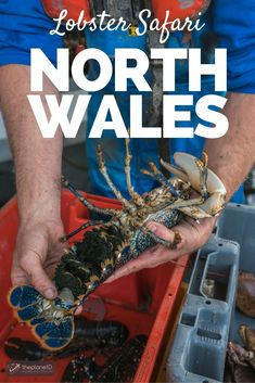 Catch of the Day – a Lobster Safari in North Wales: You need a license, a fishing boat, and there are many rules and regulations that you need to follow. Read all about it in this article | The Planet D Adventure Travel Blog