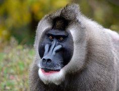 Aiku Detroit Zoo, Mammals, Amazing