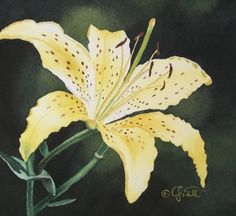 Original artwork from artist Jacqueline Gnott on the Daily Painters Gallery Lily Painting, Art Painting Gallery, Artist Gallery, Eye Painting, Beautiful Flowers Pictures, Flower Pictures, Flower Words, Flower Art, Realistic Paintings