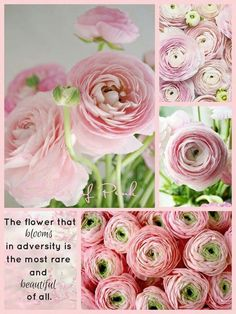 682 best quotes flowers images on pinterest in 2018 flower rose colored glasses the dreamers moody blues pretty in pink flower quotes colour board pretty pictures collages mood boards mightylinksfo