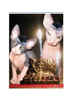 SPHYNX HANNUKAH  Holiday Card with Sphynx Cats by TheOtherMothers, $1.50