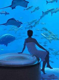 Bathroom at Atlantis in Dubai :o)  Awesome!!!!!  I would never leave the tub :)