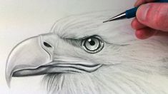 How to draw a realistic eagle head. Showing how to draw an eagle head. 3d Drawings, Realistic Drawings, Animal Drawings, Pencil Drawings, Realistic Eye, Art Drawings Sketches Simple, Feather Drawing, Lion Drawing, Eagle Drawing Easy