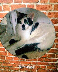#catcube #catbed #catfurniture
