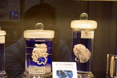 parasite-museum.jpg (710×473)