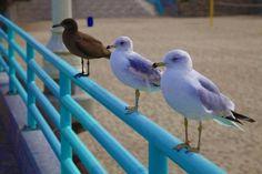 Birds Birds, Animals, Animais, Animales, Animaux, Bird, Animal, Dieren, Birdwatching