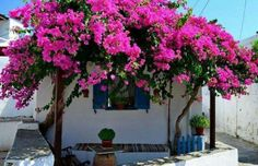 Sifnos Island in Cyclades Backyard Covered Patios, Spanish Villas, Mexican Home Decor, Mediterranean Home Decor, Wall Paint Colors, Outdoor Living, Outdoor Decor, Exotic Plants, Planting Flowers