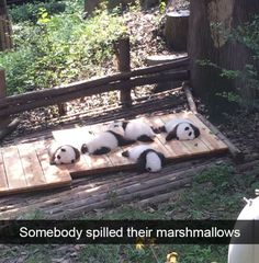 The most popular animal pictures of the week will laugh. Share to help us 'Funny Animal Memes' Funny Animal Jokes, Cute Funny Animals, Funny Cute, Animal Funnies, Adorable Baby Animals, Panda Funny, Funny Minion, Cute Animal Pictures, Funny Pictures