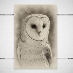 Winter Owl Photography 8x12 photograph print by jpgphotography, $26.00