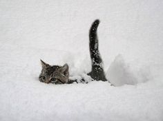 Playing in the snow.. I can't see where I'm going?!? Anyone see my tail??