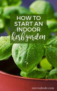 How To Start An Indoor Herb Garden. Growing an indoor herb garden is quite simple. It's also a great place to start if you're a beginner interested in learning how to garden.
