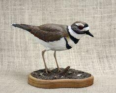 Killdeer Bird Wood Carving, Hand Carved Bird, Bird Sculpture, Wildlife Art, Bird Carving, Shorebird, Woodcarving By Mike Berlin by BerlinGlass on Etsy