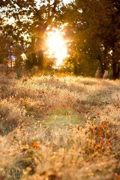 Sunlit meadow. tinywhitedaisies: Photo