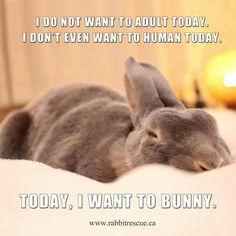 I want to bunnie!