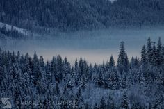 Forest in winter. Poland.