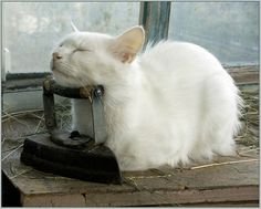 Very interesting post: TOP 48 Funny Cats Pictures.сom lot of interesting things on Funny Animals, Funny Cat. Cute Cats And Kittens, Cool Cats, Kittens Cutest, Animals And Pets, Funny Animals, Cute Animals, Pretty Cats, Beautiful Cats, Chat Bizarre