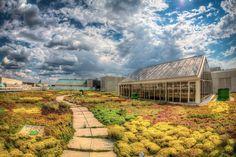 Green roof, WWF Headquarters, Washington DC