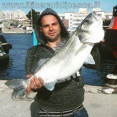 Porto di Augusta: 5kg di spigola a spinning pesca fishing