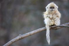 Daily Cute: 40 absurd schattige babydiertjes   Flabber