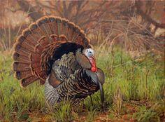 Rio Grande wild Turkey painting by Ryan Kirby