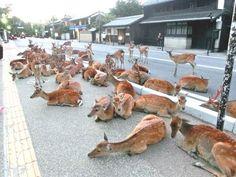 この道、鹿しかいない