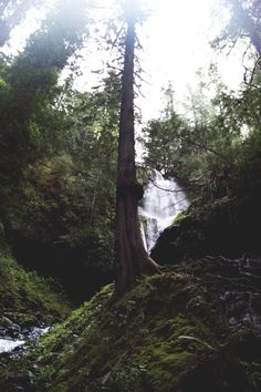 northwezt:  Murhut Falls | Washington