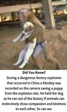 I wish everyone would be like this monkey for animals