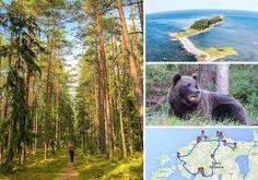 +++Der große Estland Rundreise Guide+++ 13 großartige Reisetipps und Highlights eines völlig unterschätzten Landes!