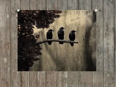 Ravens Photograph, Three Crows, Nature Art, Vintage Style, Aged Colors, Grunged - Three Like Minded Ravens. $17.00, via Etsy.