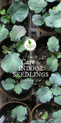 198 best growing from seed images growing seeds horticulture