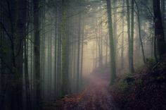 Misty Forest by Chris W. on 500px