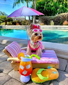 make the most of your quarantine time . Cute Dogs And Puppies, Baby Dogs, I Love Dogs, Corgi Puppies, Doggies, Yorshire Terrier, Bull Terriers, Yorky, Yorkshire Terrier Puppies