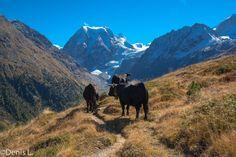 Pra gra -arolla Wallis, Photos, Mountains, Nature, Travel, Cabin, Blue, Pictures, Naturaleza