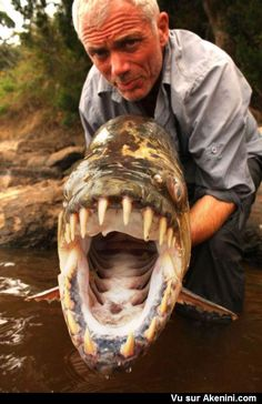 Poisson tigre goliath ou Tigerfish
