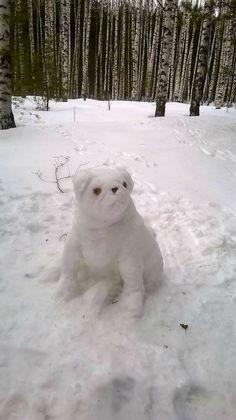 #Snowpug